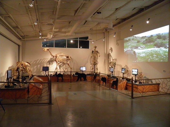 fossildiscovery